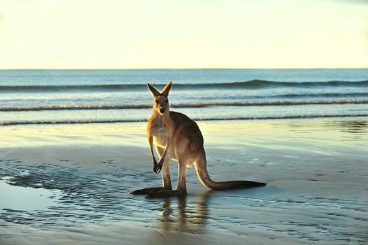 Australia lottery guide