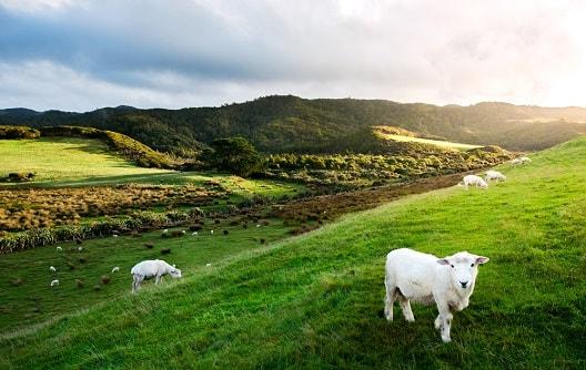 biggest New Zealand Powerball jackpot